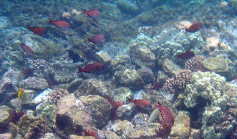 503- 20080416- Hawaii 20-Snorkelling IMG_0749.jpg