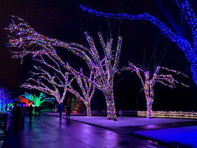 Detroit Zoo Wild Lights - 1-5-2020