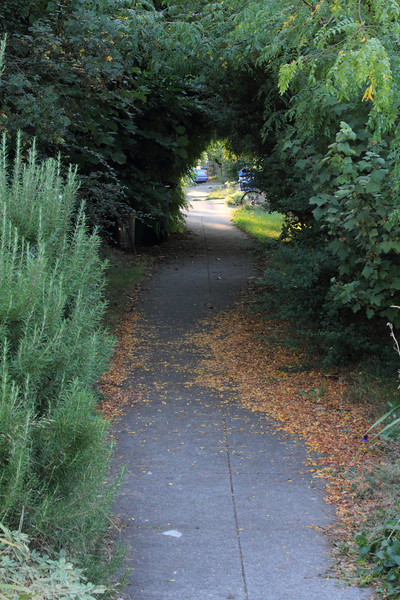 Nature, Violins and Life in East Portland