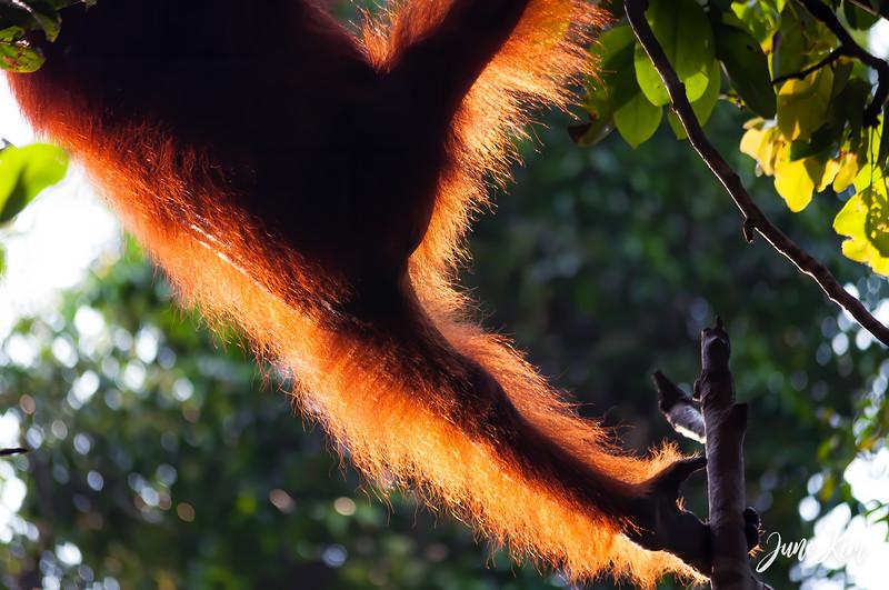 2012.10.07_Borneo_DSC_6838-Edit-Juno Kim.jpg