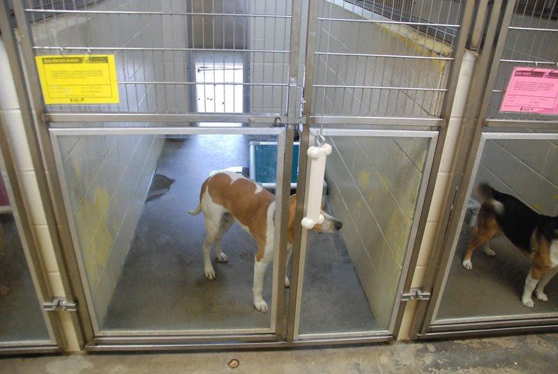 Kentucky Humane Society 2010 003.jpg