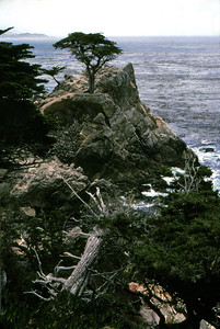 17 Mile Drive & Pebble Beach