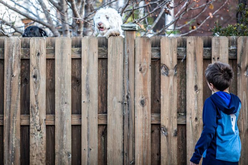 Watson on the Fence-3.jpg
