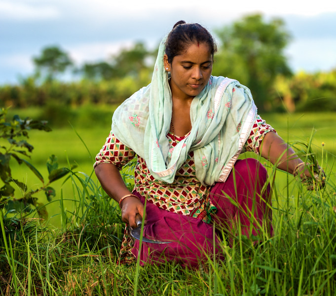 2017-09- 30-Chitwan-0021-14-Edit.jpg