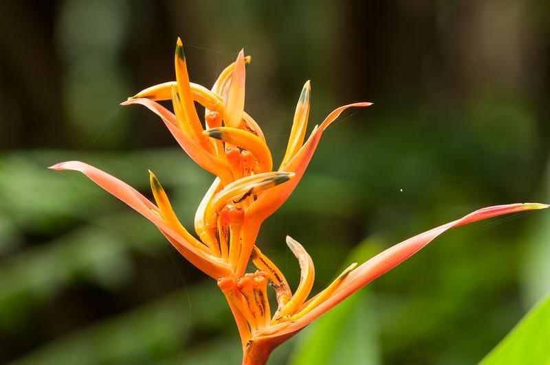 Hawaii Garden 19