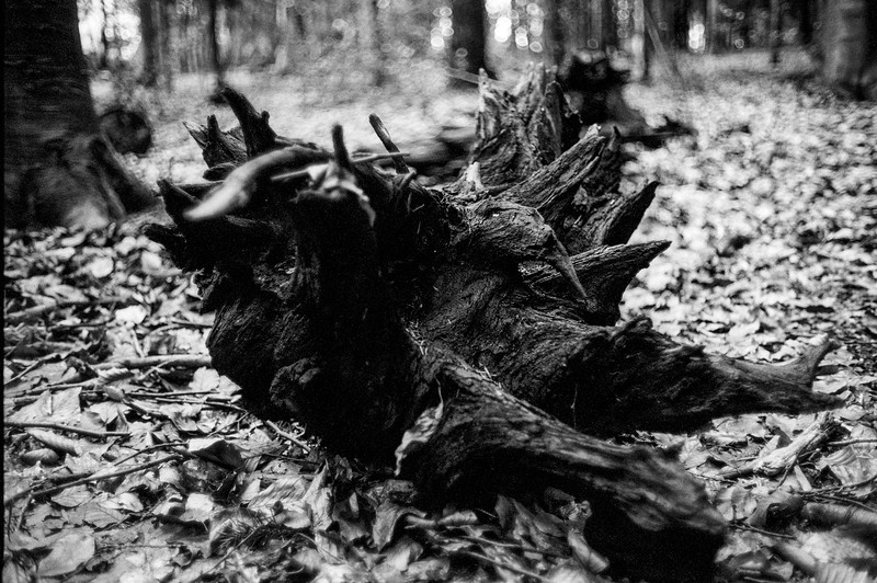 Leica-M4-P-FP4-Easter-2018-2 (19).jpg