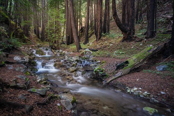 How I Got the Shot - Redwood Forest Big Sur