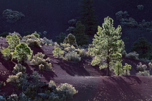 Sunset Crater and Environs