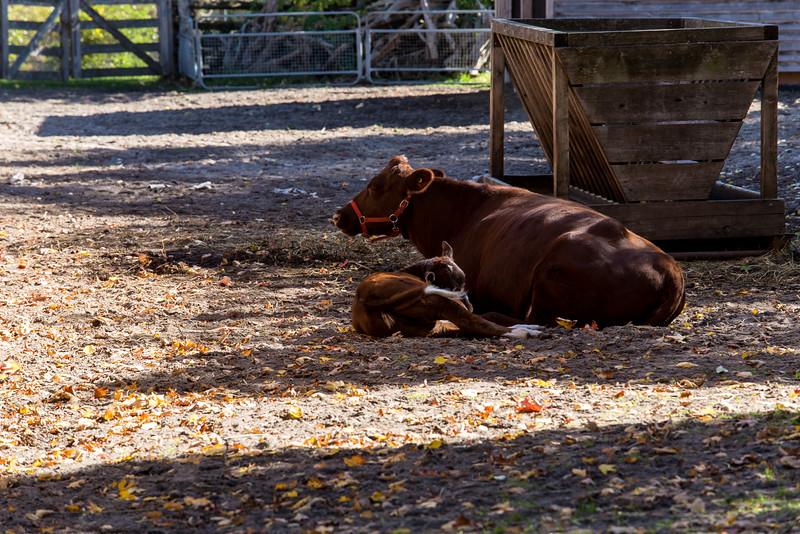 Riverdale Farm