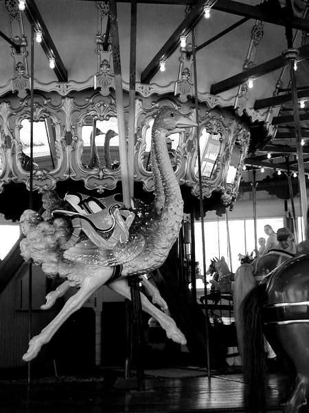 Flying_Ostrich_in_the_Mirror.jpg
