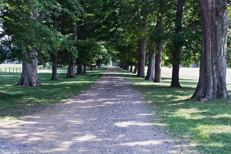 The Driveway.jpg