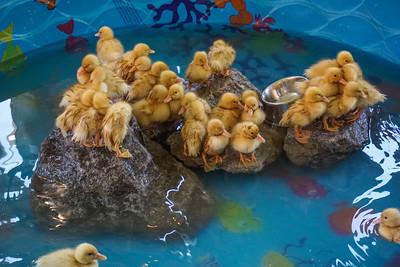 Petting-Zoo-Animals