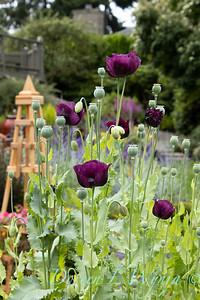 Culp flower garden