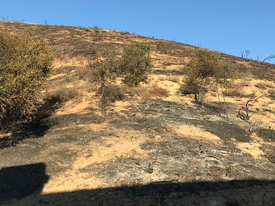 Woolsey Fire Aftermath