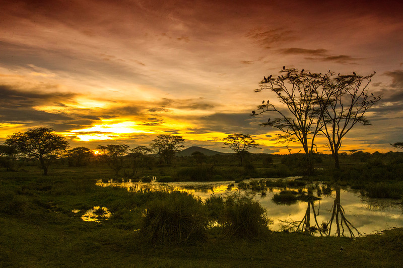 Serengeti_22_2013_Seronera_sunset_1.jpg