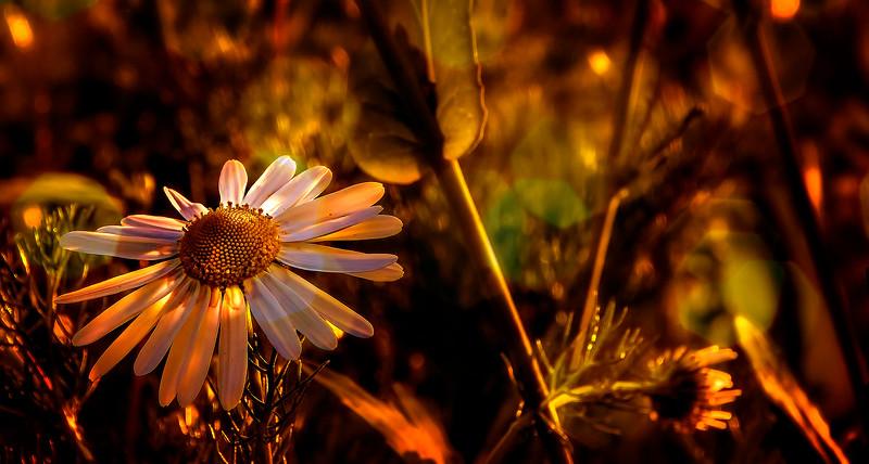 The Magic of Light-140.jpg