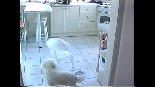 1999v Annie, Ollie & the Yoghurt