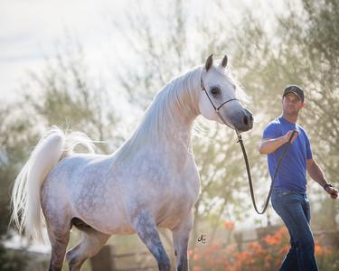2018 Training Horses