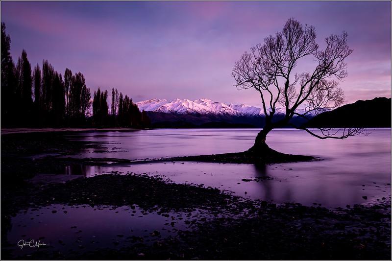 JZ7_5785 Wanaka Tree 2x3 LTr3W.jpg