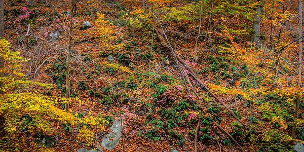 Hill Side in Fall Along Bonnie Branch #1