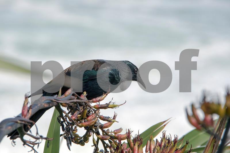 nz bird 1.jpg