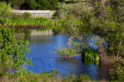 Healdsburg Ridge Open Space-Parkland Farms