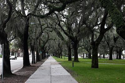 Savannah 2014