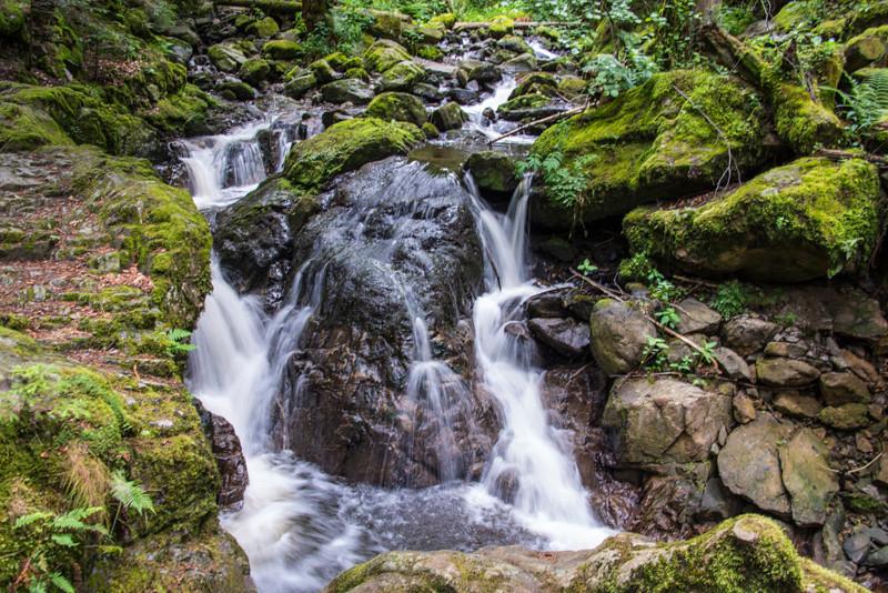 Black Forest (5).jpg