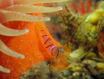 San Juan Islands Birthday Diving