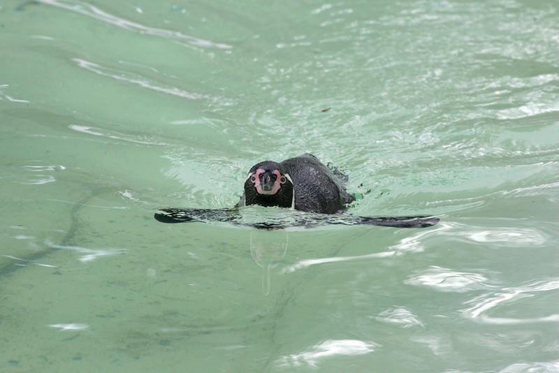 Newquay Zoo 217.jpg