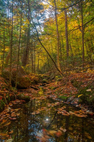 Maine Fall 2019-20.jpg