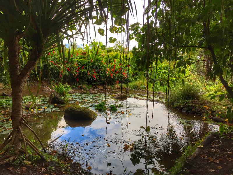 Tropical plants in Tahiti