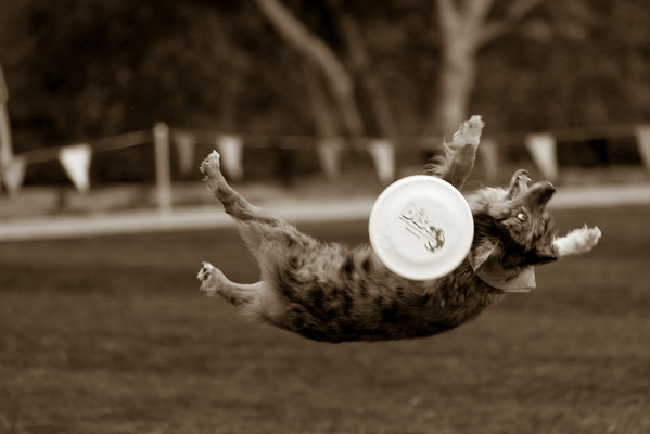 Disc Dogs