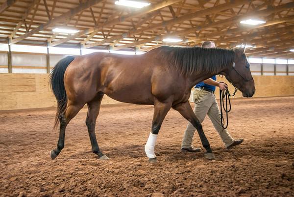 161007 Great Equine Wellness Center