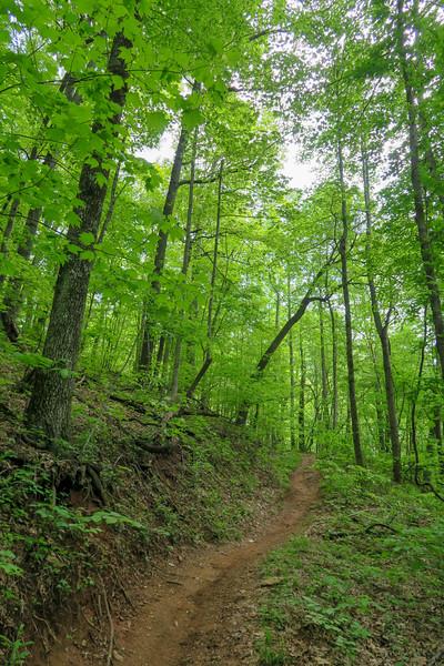 Green's Lick Trail -- 3,220'