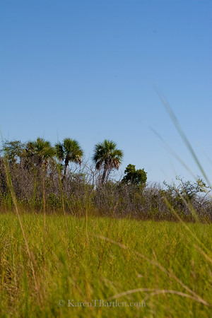9328 Prairie grass and hardwood hammock in the Ten Thousand Islands