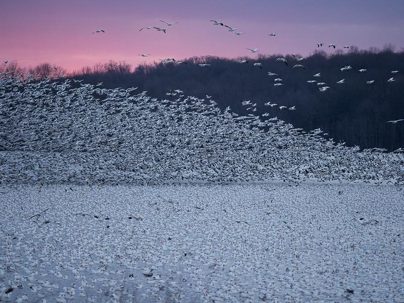 PSA nature round 3 howard sherer sunrise snowstorm.jpg