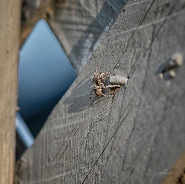 Spider master.jpg