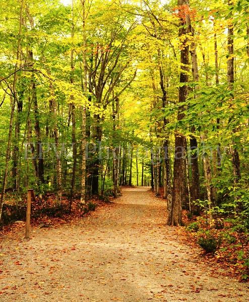 Autumn in New Hampshire VI
