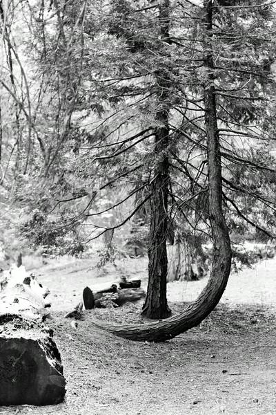 Sequoia_0697.jpg