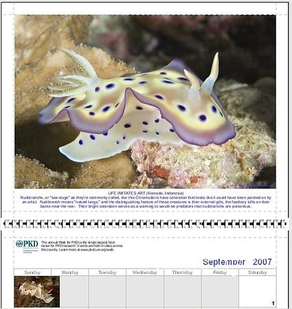 2007 PKD Calendar