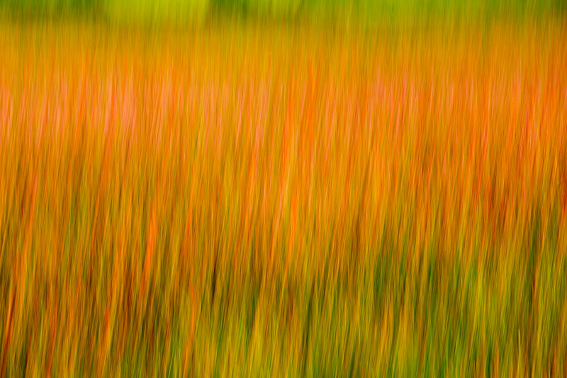 Grass and poppies 2