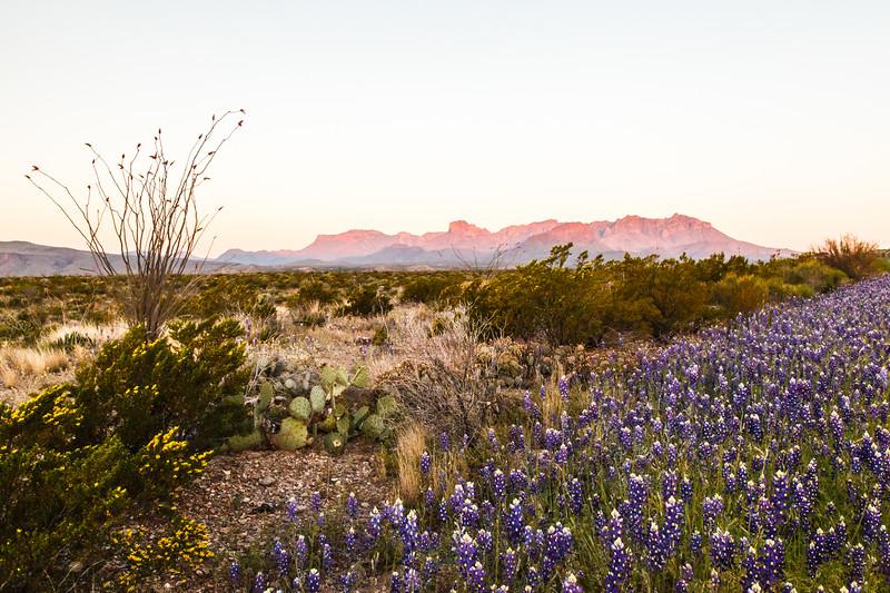 Sunrise, Big Bend National Park, Texas