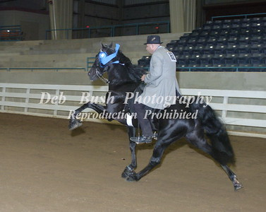 CLASS 32 AGED STALLIONS OPEN SPECIALTY