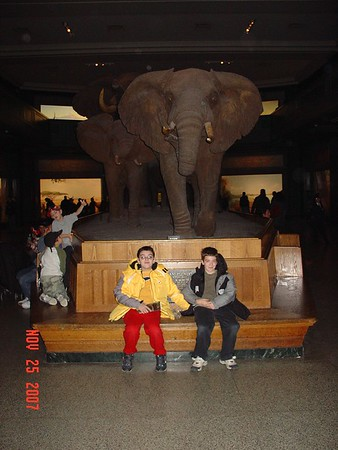AMNH 11.25.2007