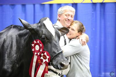 Royal Holstein Intermediate Cows 2018