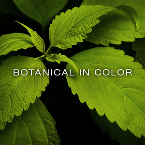 BOTANICAL IN COLOR