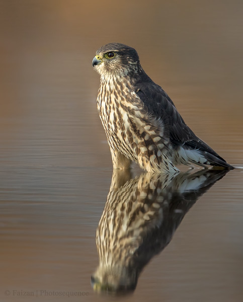 Merlin Reflection