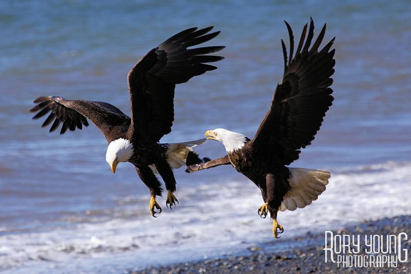 EaglesShore.jpg