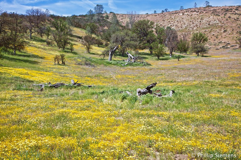 Tidy Tips and Goldfields, Shell Creek Road